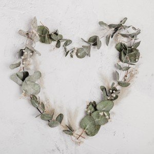 Heart shaped eucalyptus Leaves