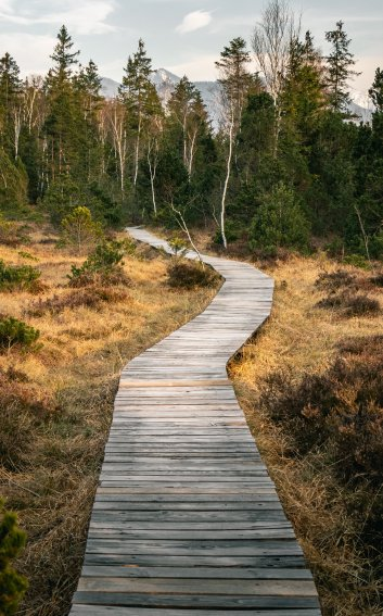 Wooden Hiking Path for your Journey
