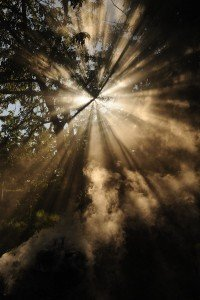 Sun Streaks i nNature Forrest