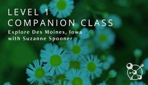 Level 1 Companion Course Des Moines