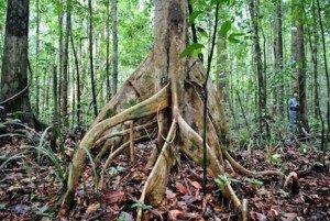 Root Chakra Tree